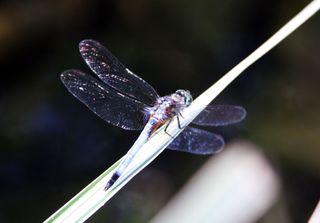 Dragonfly_edited-1