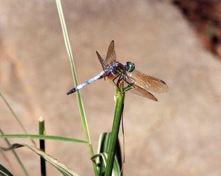 Dragonfly 1_edited-1